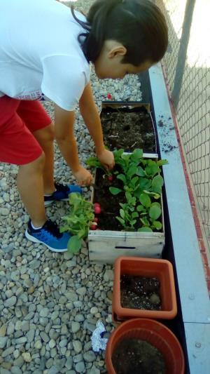 El huerto escolar II (Edición 1)