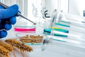 Prácticas de laboratorio en biotecnología alimentaria (Edición 1)