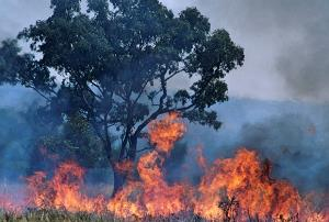 Prevención de incendios forestales. (Edición 1)