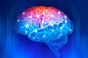 Neurodidáctica, ¿Cómo aprende el cerebro? (Edición 1)