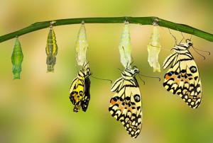 Observa y Transforma: multiplicando aprendizajes
