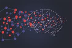 Neuroeducación Nivel 2: El fascinante mundo del cerebro que aprende (Edición 1)