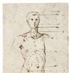 Estudio de proporciones de desnudo masculino