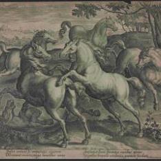 Lucha de caballos