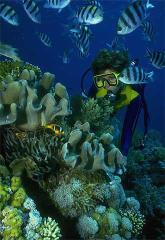 Relax entre los peces de colores