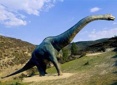 Braquiosaurio a la vista