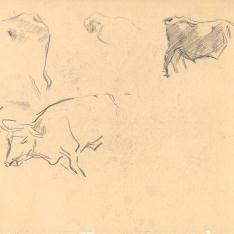 Estudios de bueyes
