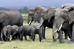 Kenia, la esencia de un continente