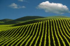 De vinos por el mundo