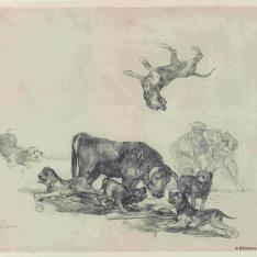 Toro acosado por perros
