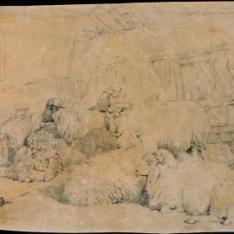Rebaño de ovejas en el establo