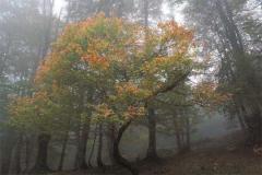 Las pinturas de los bosques