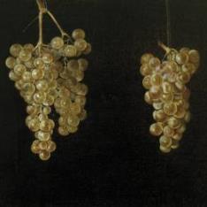 Dos racimos de uvas colgando con mosca