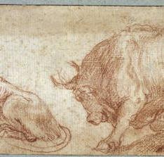 Una leona y un toro / Figura envuelta en ropajes