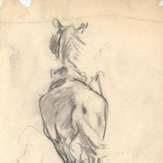 Caballo visto de espaldas