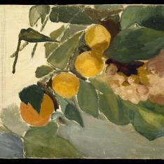 Bodegón con uvas y naranjas