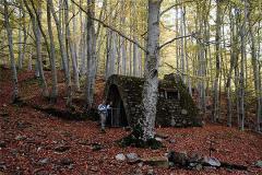Sobre un suave manto de hojas