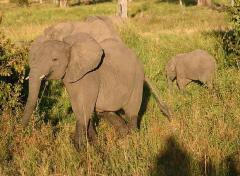 En la senda de los elefantes