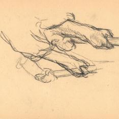 Estudio de brazos
