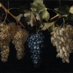 Cuatro racimos de uvas colgando