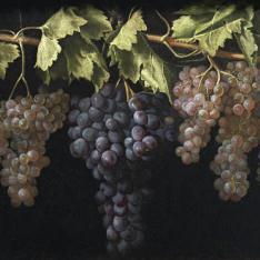 Bodegón con cuatro racimos de uvas