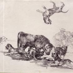 Toro acosado por los perros