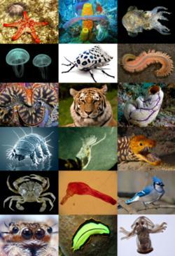 Conocimiento del Medio Natural, Social y Cultural - 5º Primaria