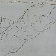 Torso Belvedere