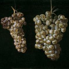 Bodegón con dos racimos de uvas