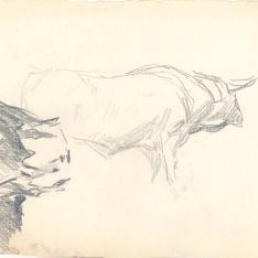 Tres estudios de bueyes