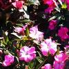 Las plantas. Material para el alumnado