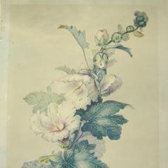 Ramo con flores de malvas reales