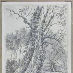Pareja de grandes árboles