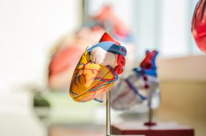 Sistema circulatorio y aparato excretor