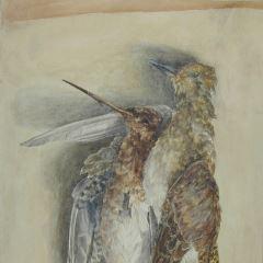 Naturaleza muerta. Dos aves