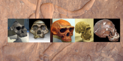Human evolution: first hominids