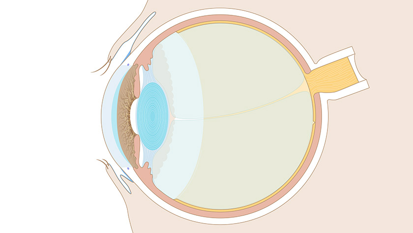 Visual system: The eye, cross section (Normal)