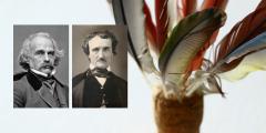 American Literature of Romanticism: Authors