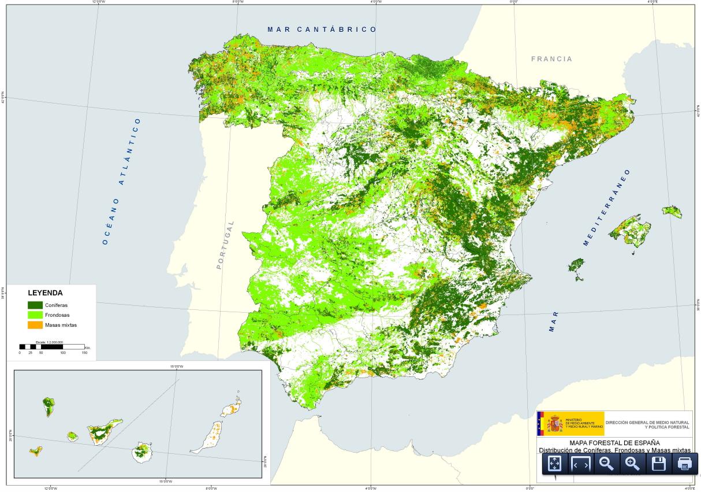 Distribución de coníferas y frondosas en España
