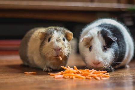Los animales: nutrición (II)