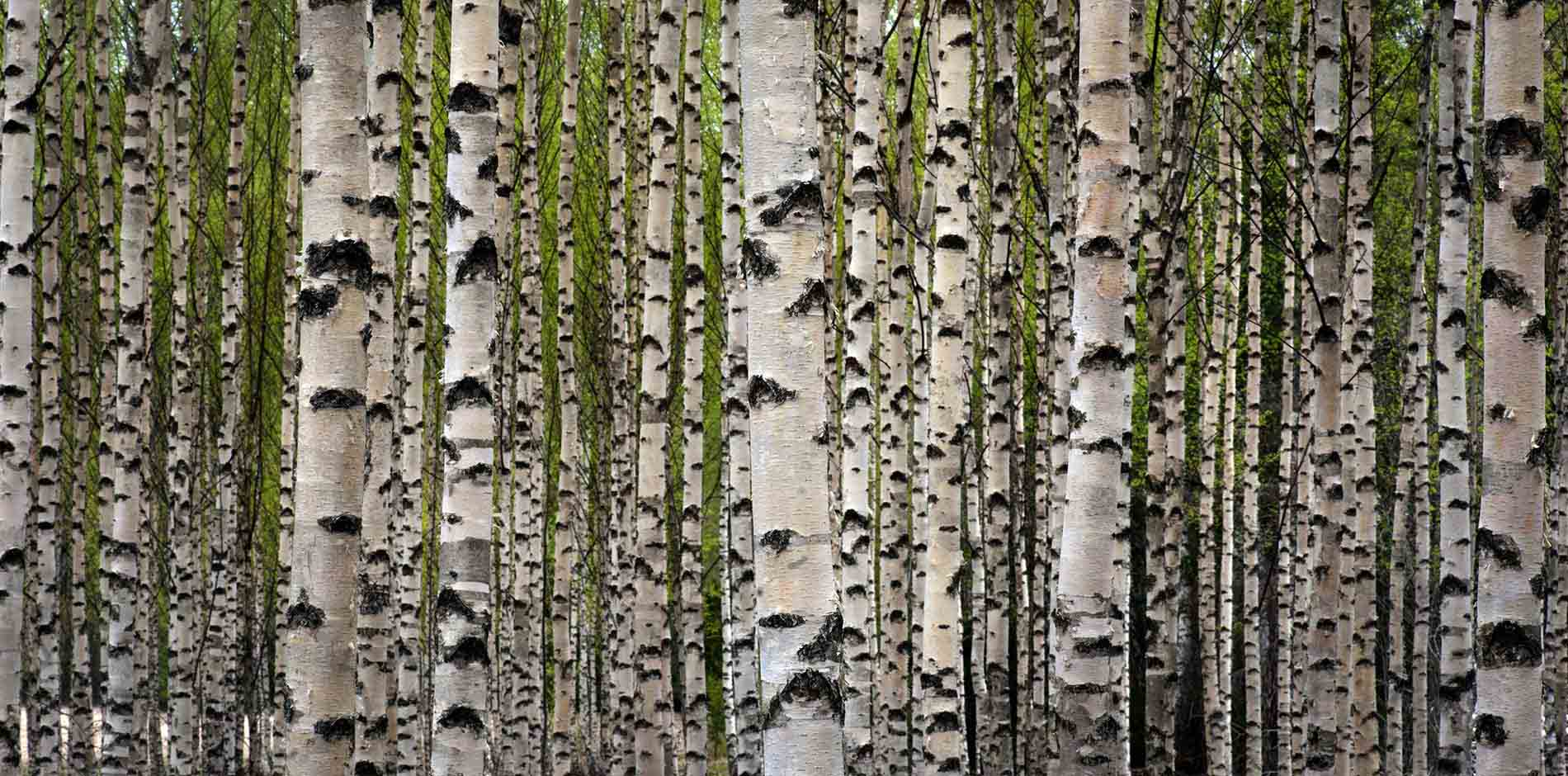 garnica_plywood_birch_1