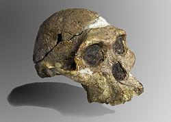 Evolucion humana. Desde los Preaustralophitecus hasta los primeros Homo