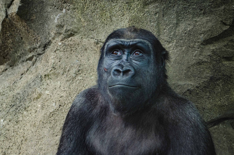 Menschliche Evolution: erste Hominiden