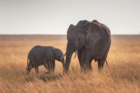 Los animales: reproducción