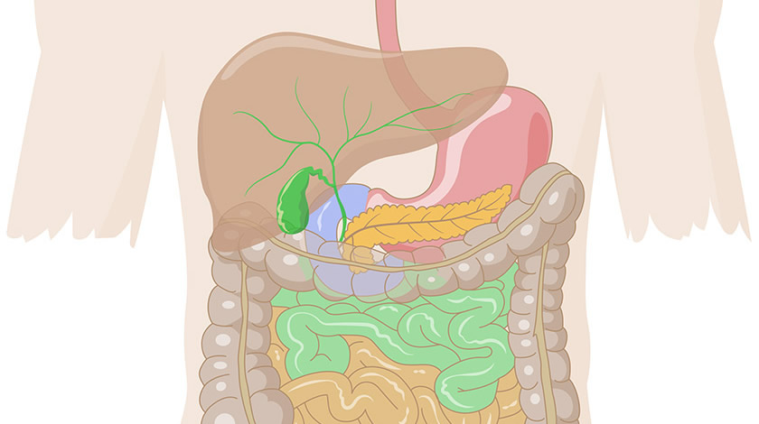 Digestive system (Easy)