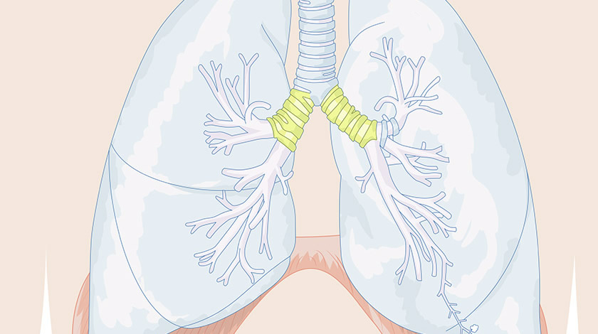 Respiratory system (Normal)