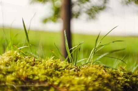 Las plantas: relación y crecimiento