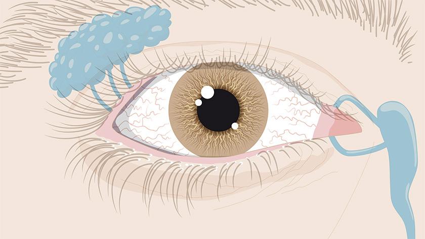 Senso della vista: L'occhio, vista esterna (Semplice)