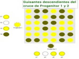Identificando genes