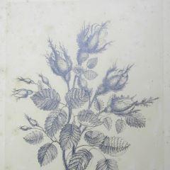 Ramo de rosas de musgo